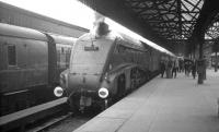 A4 Pacific no 60019 <I>Bittern</I> stands at Buchanan Street in the summer of 1966 after bringing in a train from Aberdeen.<br><br>[K A Gray //1966]