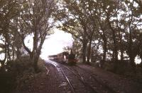 Coming through the woods near Castletown, Isle of Man, in the summer of 1987. <br><br>[Ian Dinmore /08/1987]