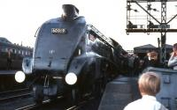 Saturday 3 September 1966 at Buchanan Street, with 60019 <I>Bittern</I> preparing to take out the last A4 hauled BR service to Aberdeen.<br><br>[G W Robin 03/09/1966]