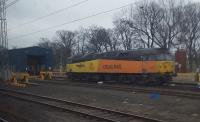 'Robin of Templecombe' at Craigentinny.<br><br>[John Yellowlees 22/01/2017]